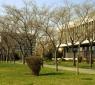 Университет Аристотеля в Салониках